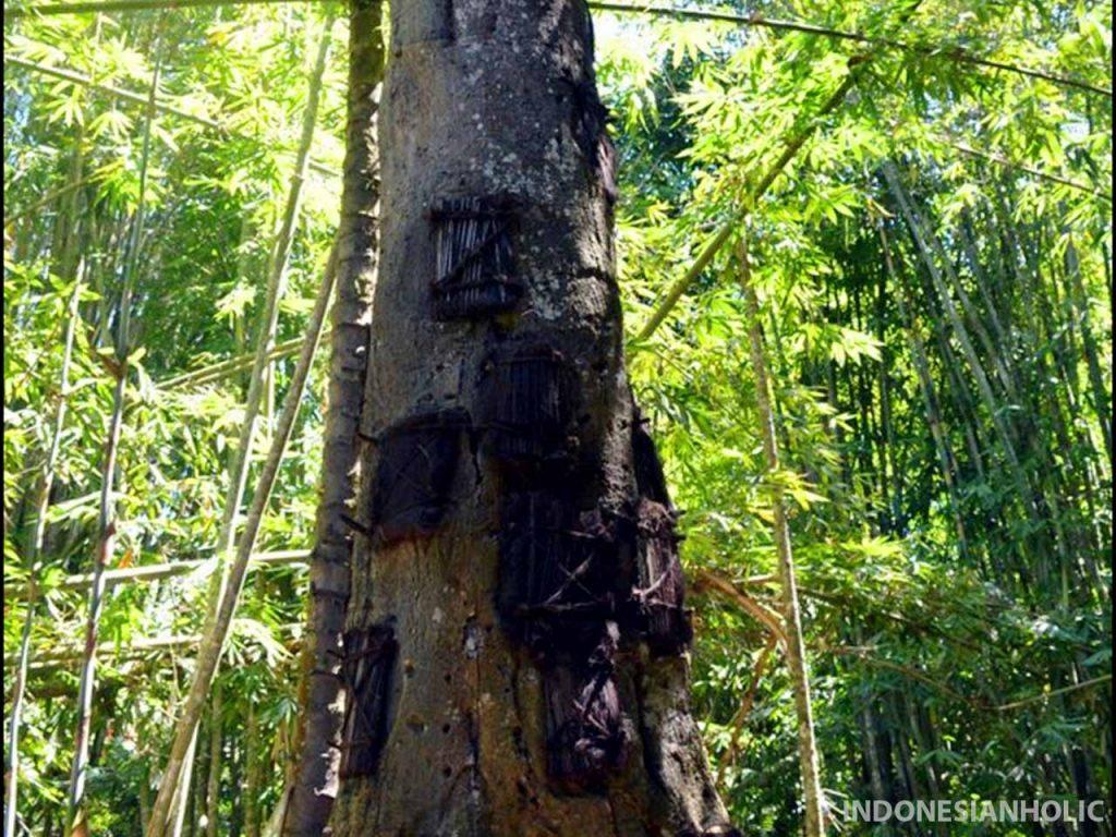 Baby Grave Kambira Toraja